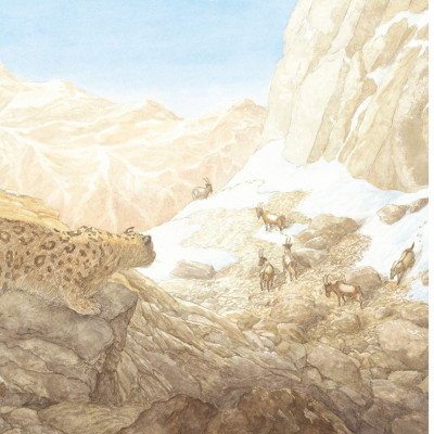 One of the beautiful spreads from inside the book *Snow Leopard: Grey Ghost of the Mountain*